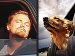 PHOTOS: When Stars Behave Like Dogs | Leonardo DiCaprio
