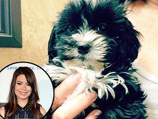 Miranda Cosgrove's Surprise Christmas Gift: A New Puppy! | Miranda Cosgrove