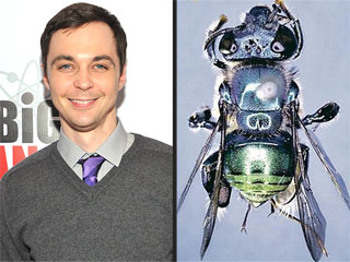 Buzz-inga! Jim Parsons's Big Bang Character Is Now a Bee Species | Jim Parsons