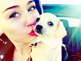 Miley Cyrus Adopts a Chihuahua Mix Named Bean