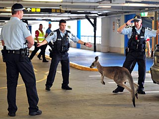Hop to It! Kangaroo Loose in Melbourne Airport