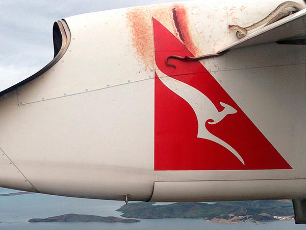 Python Clings to Qantas Flight in Australia