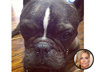 Denise Richards's Dog Dies at 13 | Denise Richards