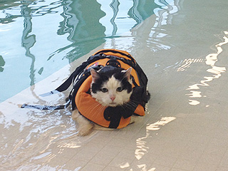PHOTO: Doggy Paddle? Chubby Cat Swims to Shed Extra Pounds