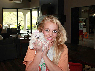 Woof! ... She Did It Again: Britney Gets Another Dog | Britney Spears