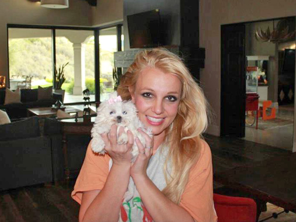 Britney Spears Gets Dog, Posts Photo on Facebook
