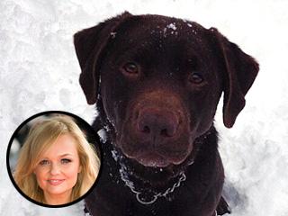 Emma Bunton's Lost Dog Has Died | Emma Bunton