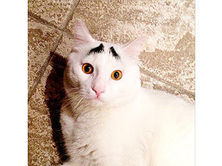 See Why the Cat with Eyebrows Is an Online Sensation