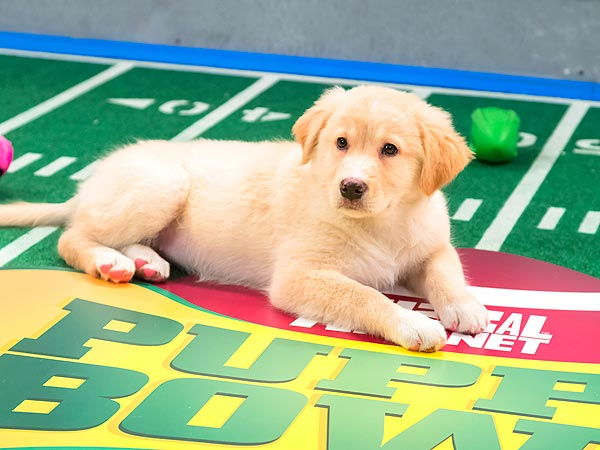 5 Most Paw-Dorable Moments from the Puppy Bowl| Animals & Pets, Cute Pets, Dogs