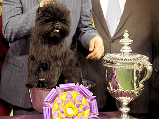 Meet Banana Joe &#8211; Best in Show