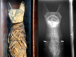 Fur Real: Bed & Breakfast Owner Finds Mummified Cat in Attic