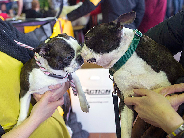 Westminster's Most Paw-some Moments – So Far!| Dogs, Westminster Kennel Club Dog Show