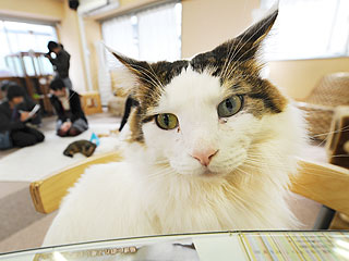 The Water Bowl: Happy Cat Day, Japan!