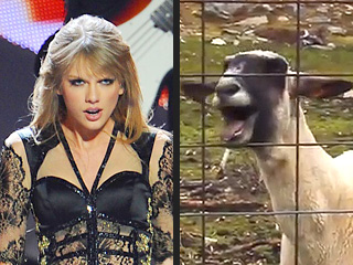 No One Loved the Screaming Goat Videos More Than Taylor Swift