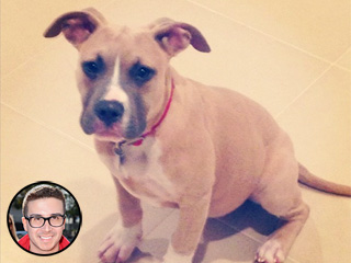 Meet Vinny Guadagnino's New 'Gorgeous Girl': A Rescue Dog | Vinny Guadagnino