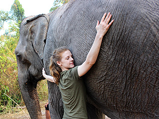 Ashley Bell's Blog: Meet the Elephants Who Captured My Heart