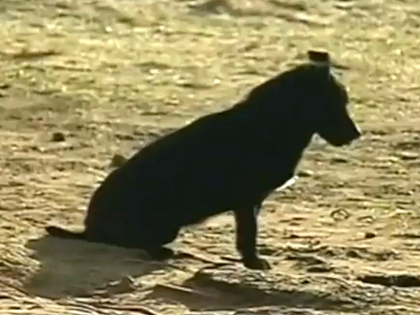 Dog Saves Missing 3-Year-Old Girl in Poland : People.600