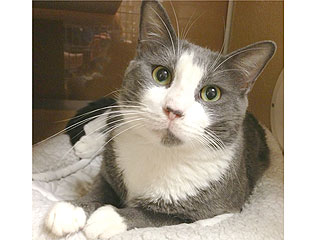 Adopt Me! Won&#39;t You Let Humphrey Sit in Your Lap?