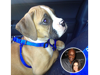 PHOTO: Khlo&#233; & Lamar Bring Home a Boxer Puppy | Khloe Kardashian, Lamar Odom