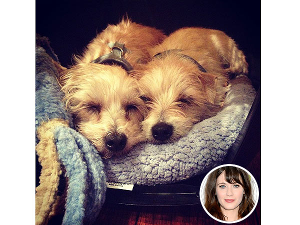 Zooey Deschanel: Zelda, Dot Rescue Dogs (Photo)
