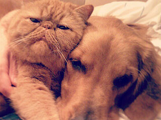 The Daily Treat: Sometimes Cats and Dogs Become BFFs