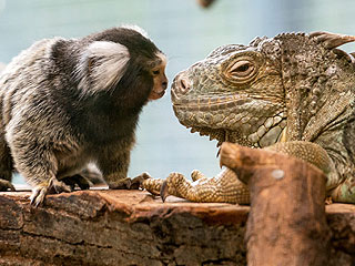 The Daily Treat: Let a Monkey and an Iguana Teach You the Meaning of Friendship