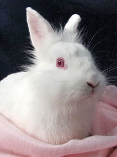 Adopt Me! Sassy the Rabbit Is Cuter than the Easter Bunny