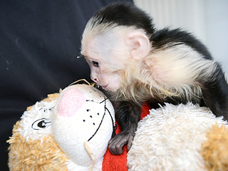 Justin Bieber's Monkey Is Already Kissing Someone Else