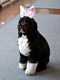 PHOTO: See Bo Obama as the Easter Bunny