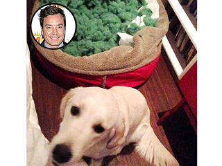 The Daily Treat: Jimmy Fallon&#39;s Dog Is Weird &#8211; and He Knows It | Jimmy Fallon