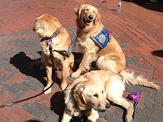 'Furry Counselors' Help Those Grieving in Boston