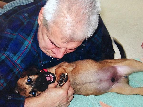 Jenna Morasca's Blog: Why You Should Adopt an Older Dog| Stars and Pets, Dogs, Pet Adoption, Jenna Morasca