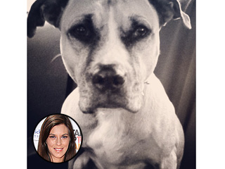 Jenna Morasca's Blog: Why You Should Adopt an Older Dog | Jenna Morasca
