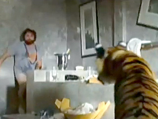 Surprise! Woman Finds Escaped Tiger in the Bathroom
