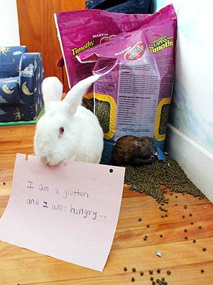 The Daily Treat: Is Bunny Shaming the New Dogshaming?