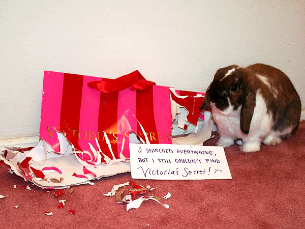 The Daily Treat: Is Bunny Shaming the New Dogshaming?| Animals & Pets, Exotic Animals & Pets, Zoo Animals