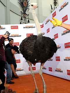 PHOTO: The Strangest Thing That Happened at the Arrested Development Premiere