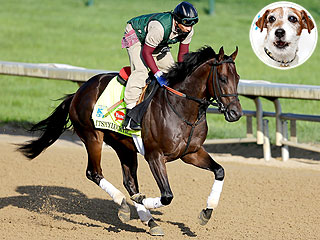 Who to Bet on in the Kentucky Derby? Uggie the Dog Weighs In