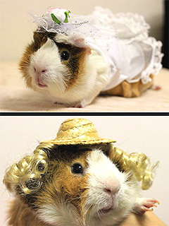 The Daily Treat: Guinea Pigs Who Dress Better Than Us