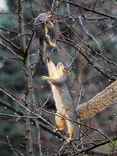 The Daily Treat: Mama Squirrel Saves the Day