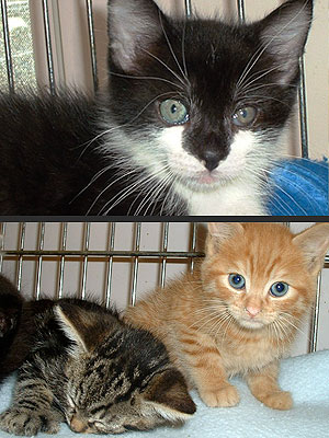 Adopt Us! Meet Three Kittens Who Will Steal Your Heart