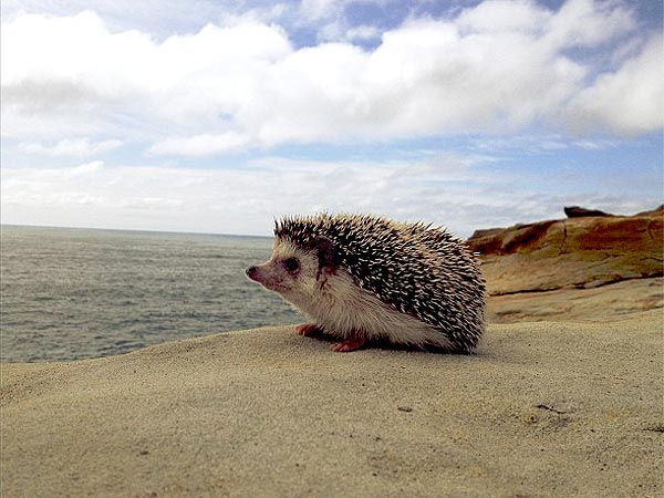 The Daily Treat: Meet Adorable Animal Explorer Biddy the Hedgehog| Animals & Pets, Unusual Pets, Wacky Animal Stories