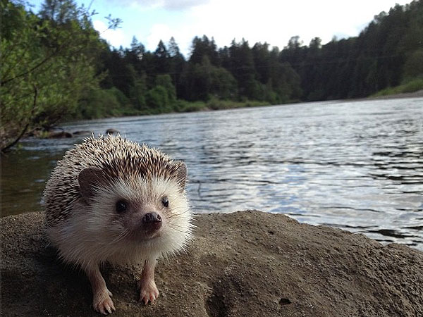 The Daily Treat: Meet Adorable Animal Explorer Biddy the Hedgehog