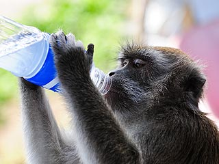 The Daily Treat: This Monkey Is Poppin' Bottles