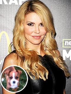 Brandi Glanville Gets New Dog as She Searches for Missing Chihuahua