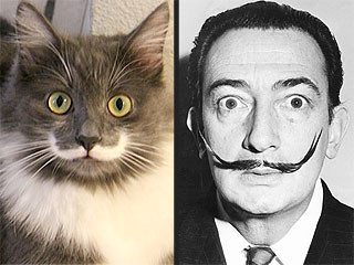PHOTO: Does This Cat Look Like Salvador Dalí to You?