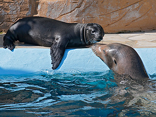 The Daily Treat: Baby Sea Lion Soaks Up the Sun with Mom