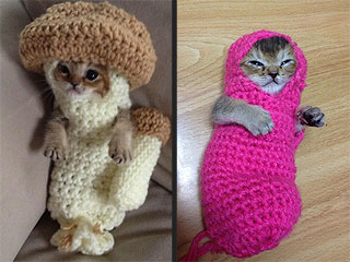 The Daily Treat: Kitten Dressed as Mushroom Is What You've Been Missing