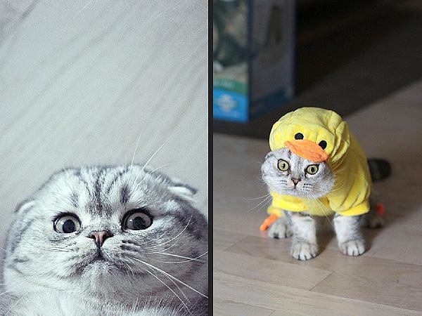 Follow Roku: Cutest Cat on Instagram