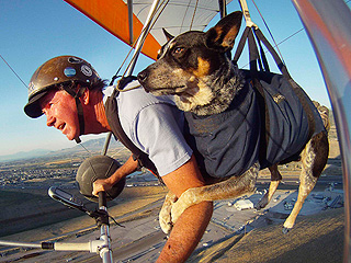 The Daily Treat: Nothing to See Here, Just a Hang Gliding Dog